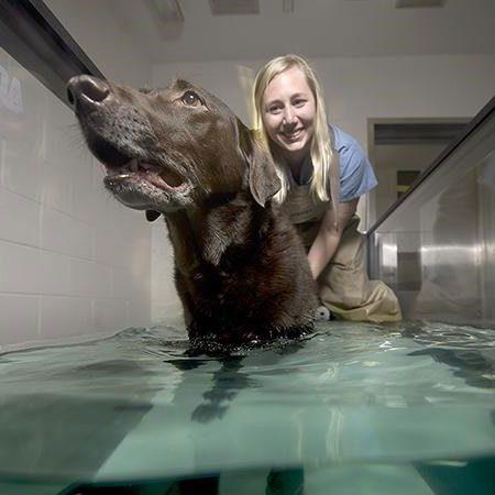 Underwater treadmills for Canine